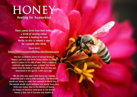honey_healing for mankind