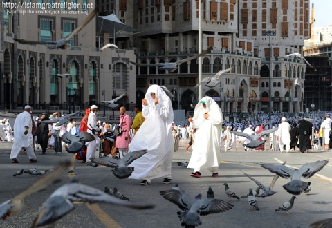 Birds fly over Muslim pilgrims near the Grand Mosque in the Saudi holy city of Mecca on November 3, 2011. (Fayez Nureldine/AFP/Getty Images)