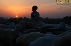 A man is silhouetted against the sun while selling livestock at a cattle market ahead of the Eid al-Adha festival on the outskirts of Islamabad, Pakistan, on October 29, 2011. Muslims around the world celebrate the Islamic festival Eid al-Adha by slaughtering sheep, goats, cows and camels to commemorate Prophet Abraham's willingness to sacrifice his son Ishmael on God's command.