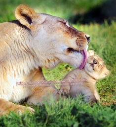 Mothers Love in Special !