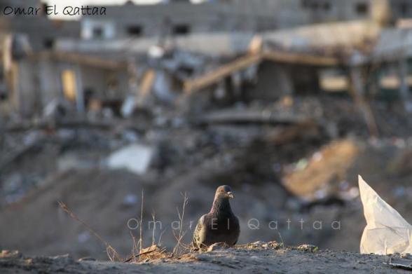 Nov 18 2012 - Gaza Under Attack by Israel Photo by  Omar el Qattaa