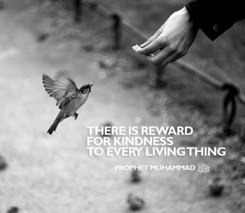 There is a Reward for Kindness in Everything living.